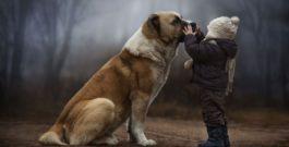 Яку користь для здоров'я приносять домашні собаки
