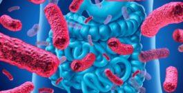 Як бактерії відповідають за наше здоров'я